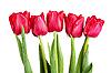 ID 3153368   Tulips   High resolution stock photo   CLIPARTO