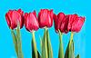 ID 3153369 | Tulips | High resolution stock photo | CLIPARTO