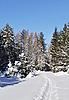 겨울 숲에서 스키 트랙 | Stock Foto