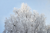 Snow-covered tree | Stock Foto