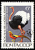 Photo 300 DPI: Ostrich and golden pheasant on post stamp
