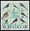 Photo 300 DPI: Forest birds on post stamp