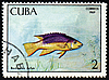 Photo 300 DPI: Fish Bodianus rufus on post stamp