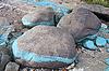 Dirty stones at riverbank | Stock Foto