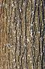 旧树皮纹理与地衣 | 免版税照片