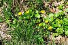 Yellow flowers among green grass | Stock Foto