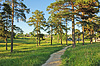Photo 300 DPI: Earth foot path between pine trees