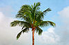 ID 3144890   Top of coconut tree on sky background   High resolution stock photo   CLIPARTO