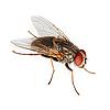 Fliege | Stock Foto