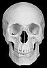 人类头骨 | 免版税照片
