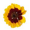 黄花 | 免版税照片