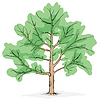 Vector clipart: Simplified image - crone of tree