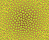 Vector clipart: color texture - pattern of cells