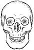 Vector clipart: Skull - rough drawing
