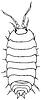 Vector clipart: Woodlouse - monochrome drawing