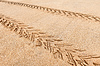 Quad traces on beach sand | Stock Foto