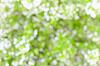 模糊抽象背景 - 樱花 | 免版税照片
