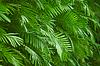 棕榈树叶背景 | 免版税照片