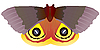 Vector clipart: Butterfly Saturniidae