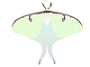 Vector clipart: drawing of butterfly Saturniidae