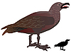 Vector clipart: great skua