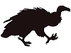 Vector clipart: griffon vulture