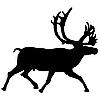Vector clipart: reindeer