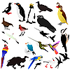 Vector clipart: collection of birds