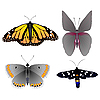 Vector clipart: Collection of images of beautiful butterflie