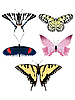 Vector clipart: Collection of images of beautiful butterflies