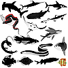 Vector clipart: Collection of fish