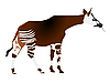 Vektor Cliparts: Okapi