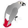 Vector clipart: gray parrot Jaco