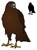 Vector clipart: Steppe Eagle