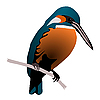 Vector clipart: beautiful bird