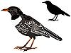 Vector clipart: the blackbird