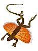 Vector clipart: Trachinus radiatus