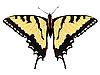 Vektor Cliparts: schönen Schmetterling