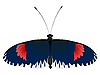 Vector clipart: color butterfly