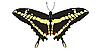 Vector clipart: drawing of Papilio machaon