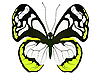 Vector clipart: Large white butterfly