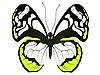 Vektor Cliparts: Große weiße Schmetterling