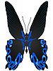 Vector clipart: beautiful butterfly