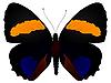 Vektor Cliparts: Schmetterling