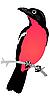Vector clipart: shrike