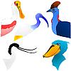 Vector clipart: color bird`s heads