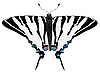 Vector clipart: figure of the butterfly
