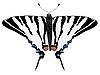 Vektor Cliparts: Bild des Schmetterlings