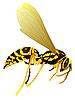 Vektor Cliparts: Zeichnen von Wespe