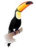 Vector clipart: toucan sitting